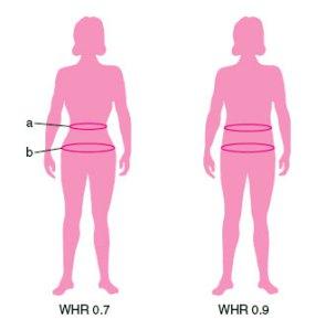 WHR - wskaźnik otyłości
